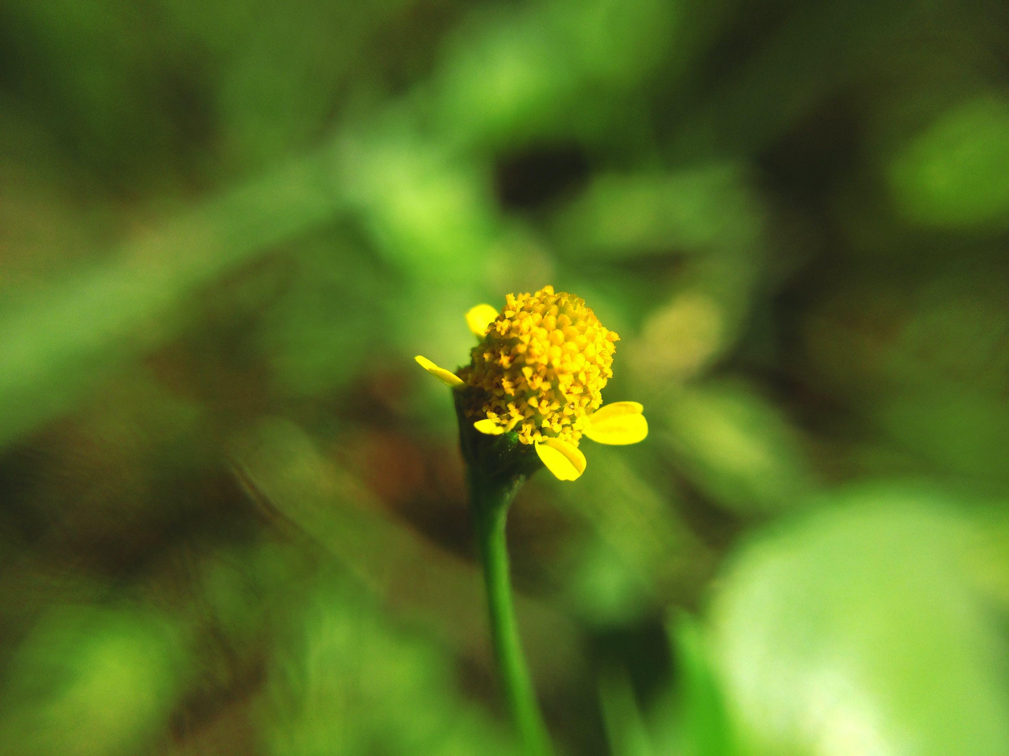 Kostenloses Stock Foto zu blume, gelb, gelbe blume, grün