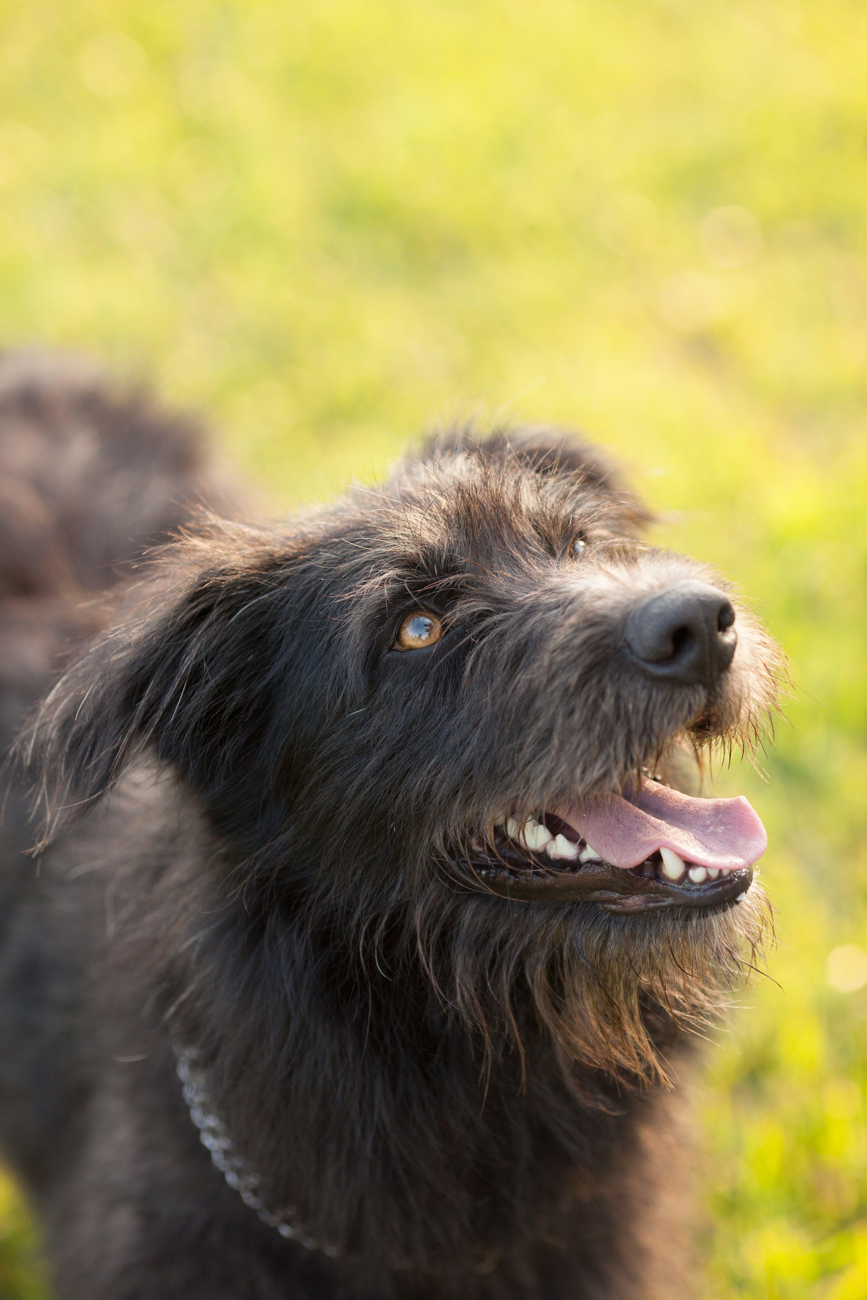 Closeup Photography of Black Dog