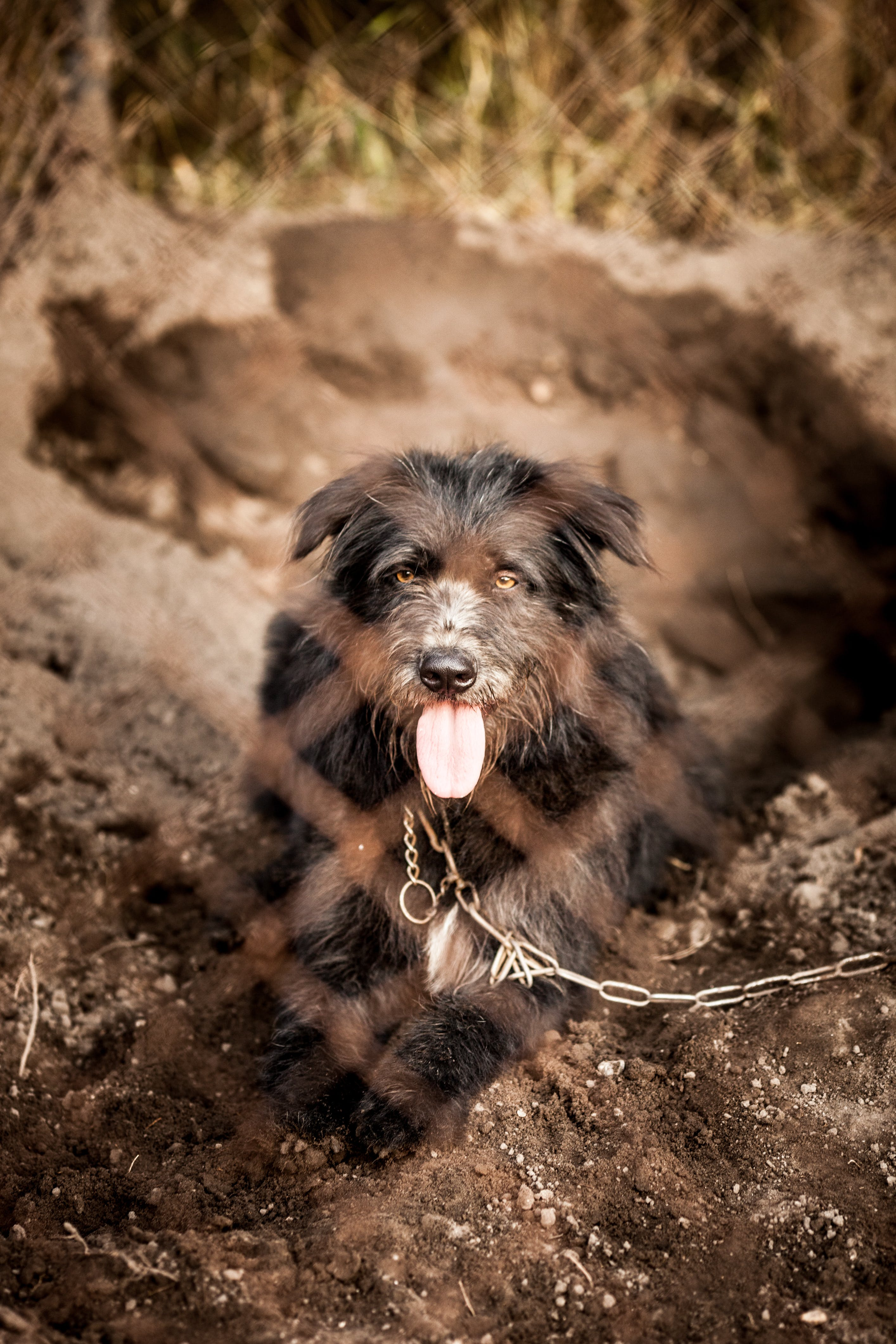 hund, obdachloser hund, streunender hund