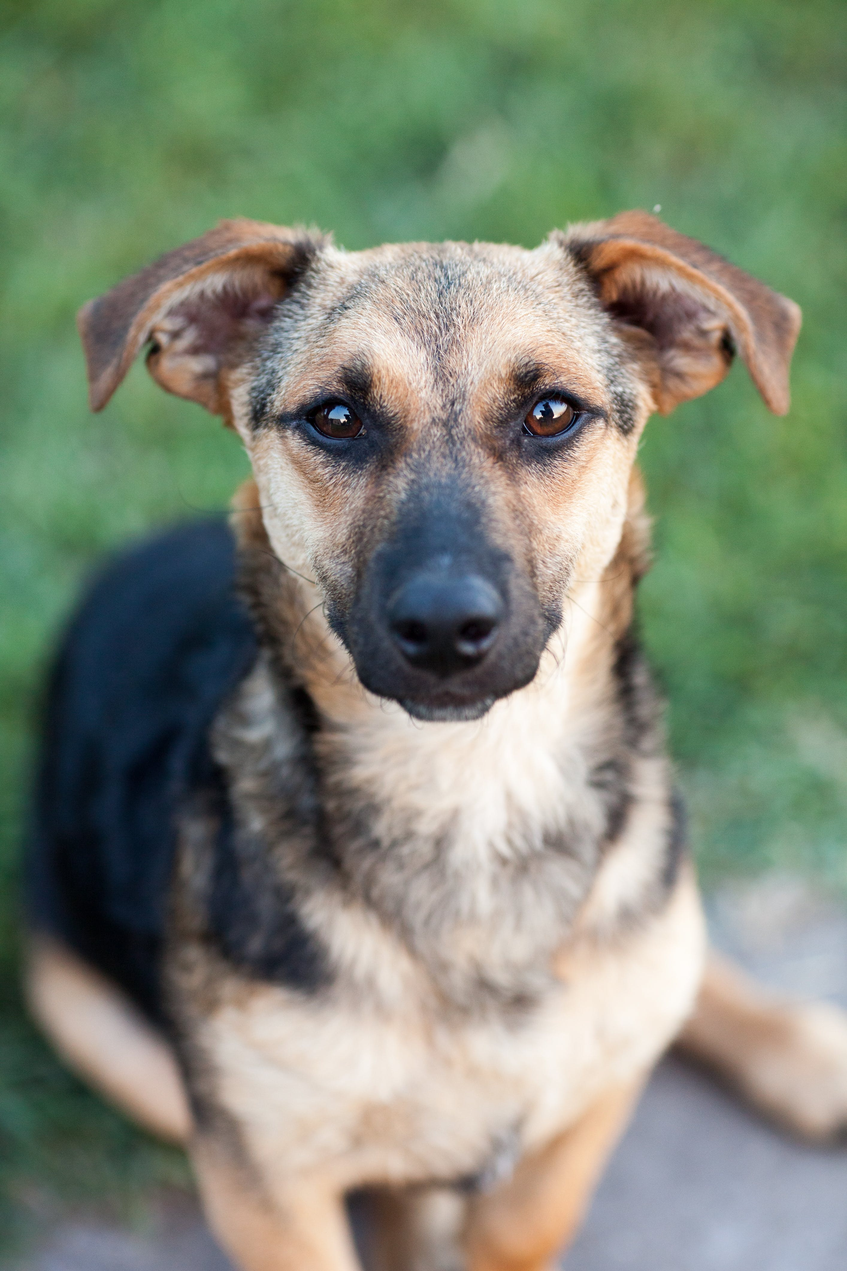 Shallow Focus Photography of Black and Brown Dog