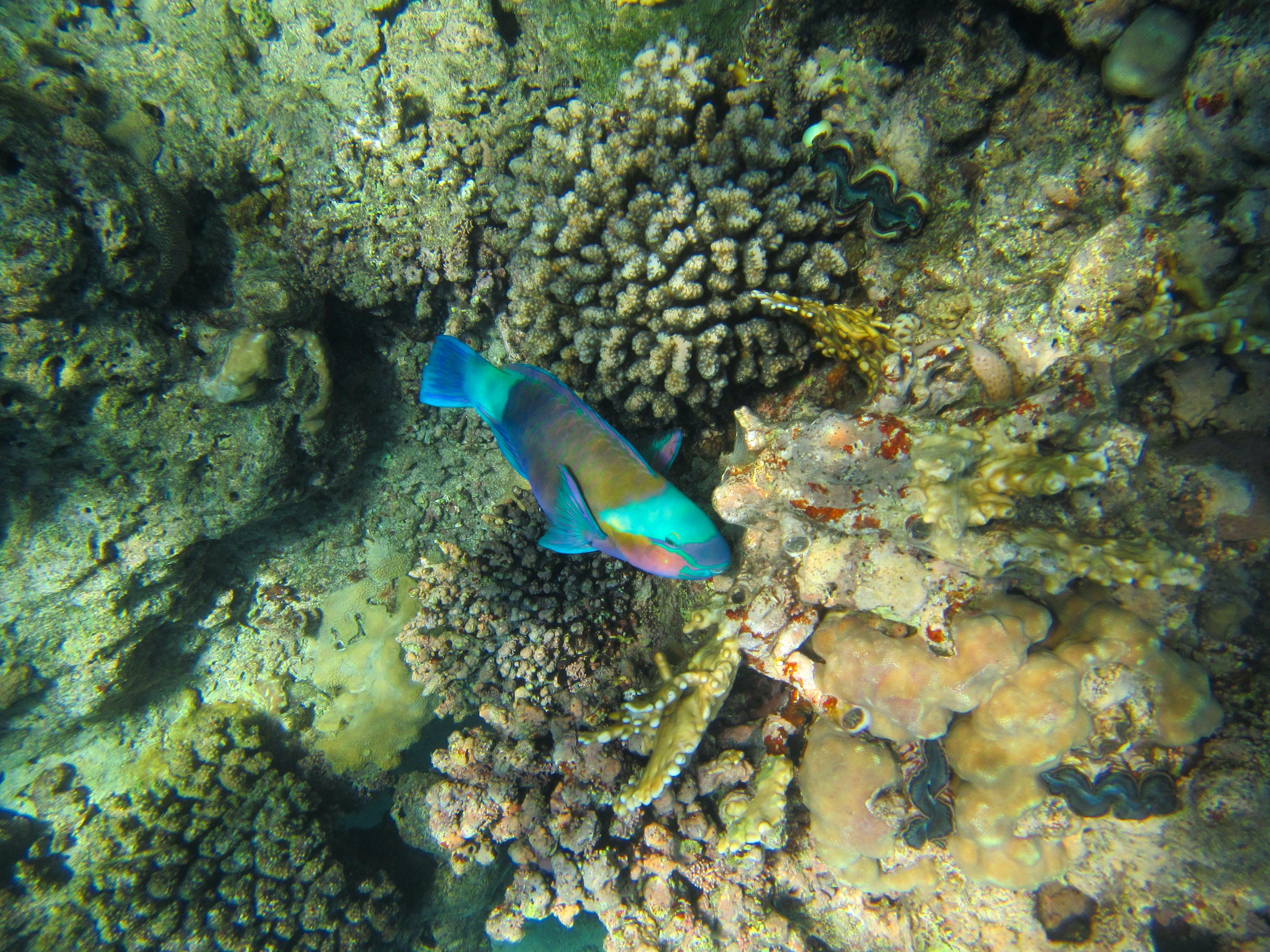 Free stock photo of corals, deep sea, egypt, fish