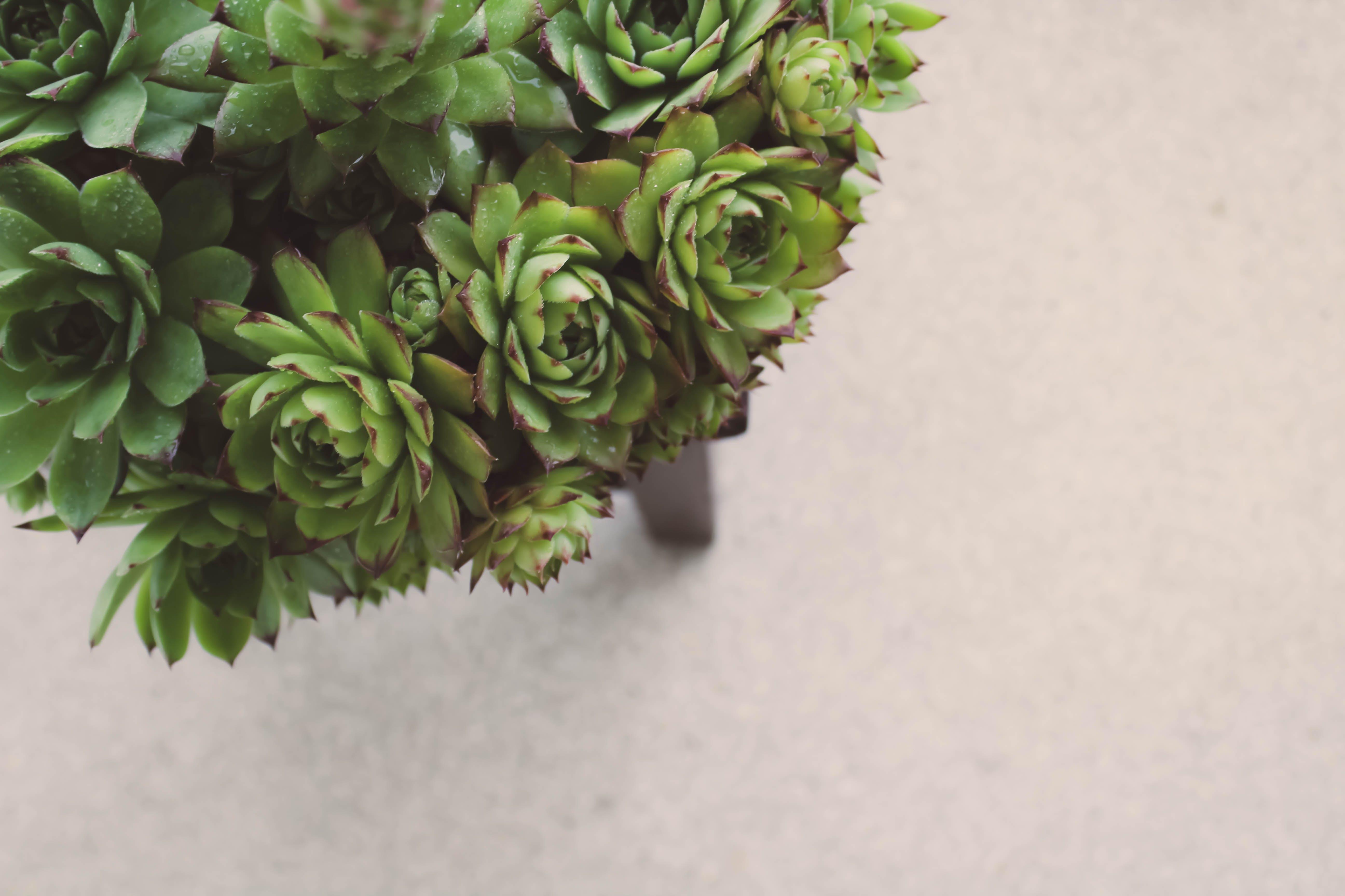 Kostenloses Stock Foto zu dunkelgrün, dunkelgrüne pflanzen, garten, gartenarbeit