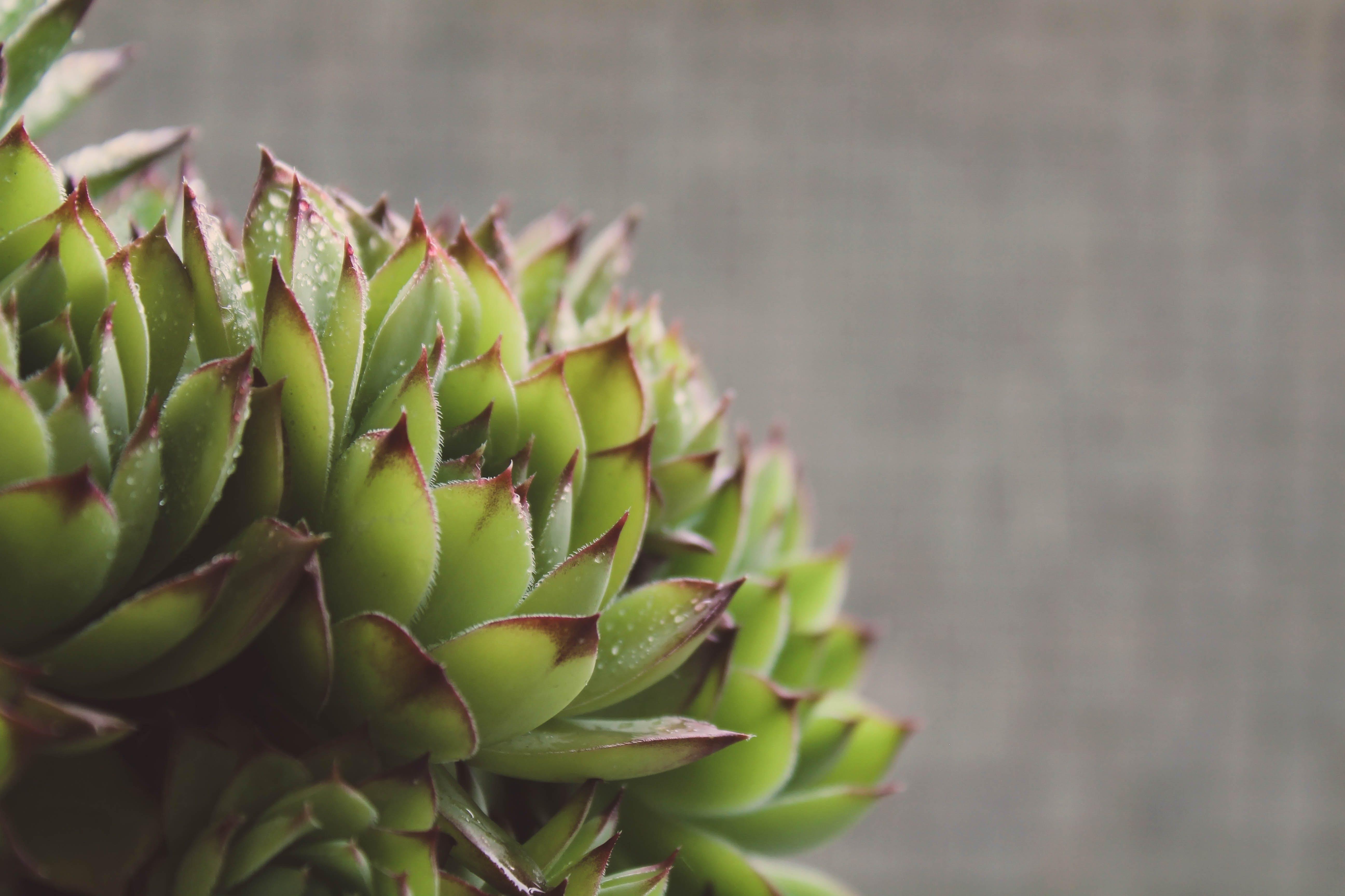 Kostenloses Stock Foto zu dunkelgrüne pflanzen, garten, gartenarbeit, gartenpflanze