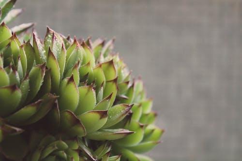 Foto d'estoc gratuïta de jardí, jardí de casa, jardineria, planta de jardí