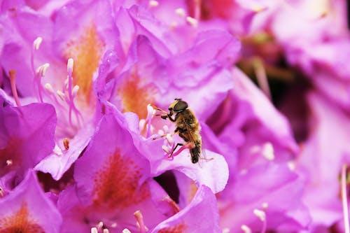 Бесплатное стоковое фото с жуки, зависать летать, максросъемка, насекомое