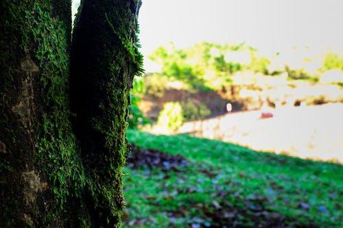 Foto d'estoc gratuïta de #tree, a l'aire lliure, arbre, herba