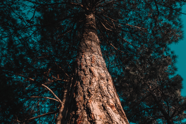 barvy, denní světlo, fotografie znízkého úhlu