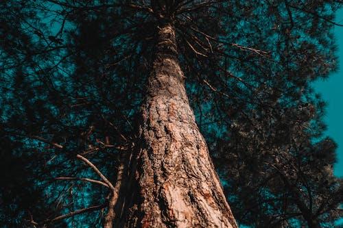 Foto stok gratis alam, alami, api, cabang pohon