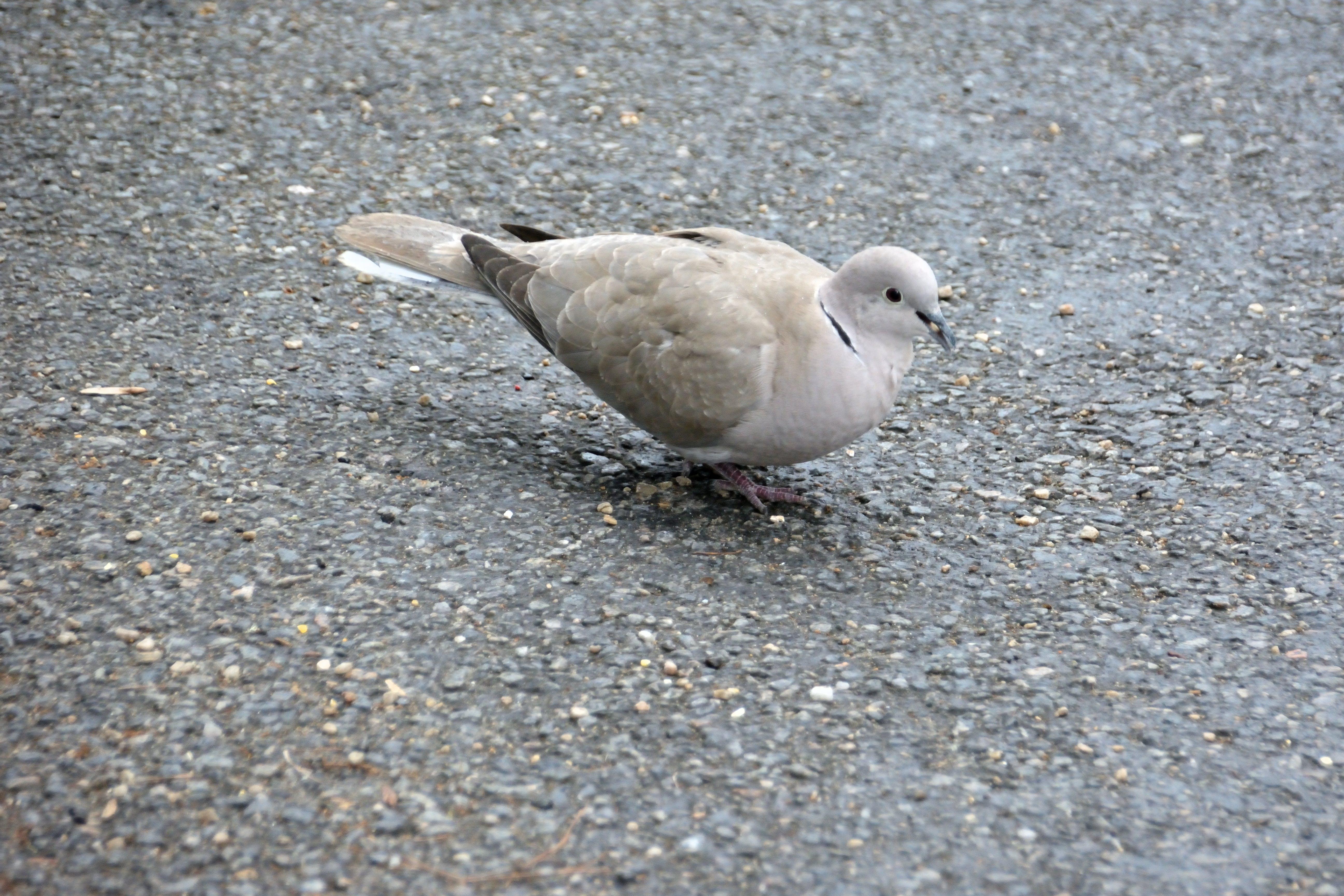 Δωρεάν στοκ φωτογραφιών με bec, faune, oeil d'oiseau, oiseau