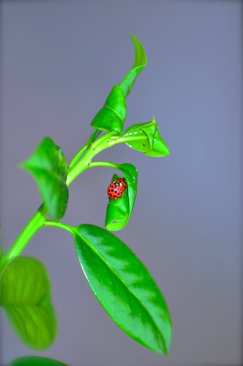 Ilmainen kuvapankkikuva tunnisteilla luontoäiti, rakastella, rakastelu, rakkaus bug