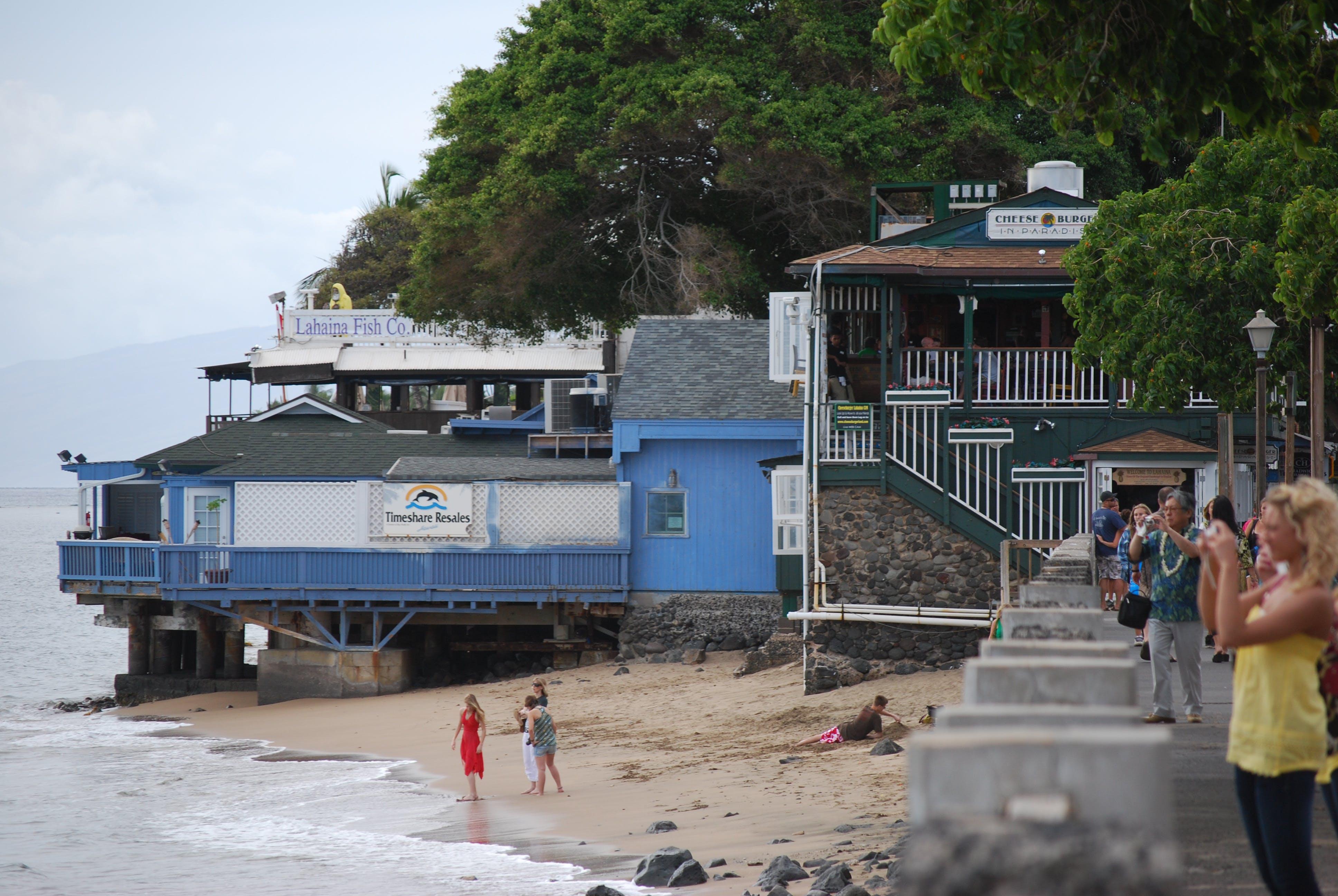 Gratis lagerfoto af front street, lahaina fisk selskab, restuarant, strand