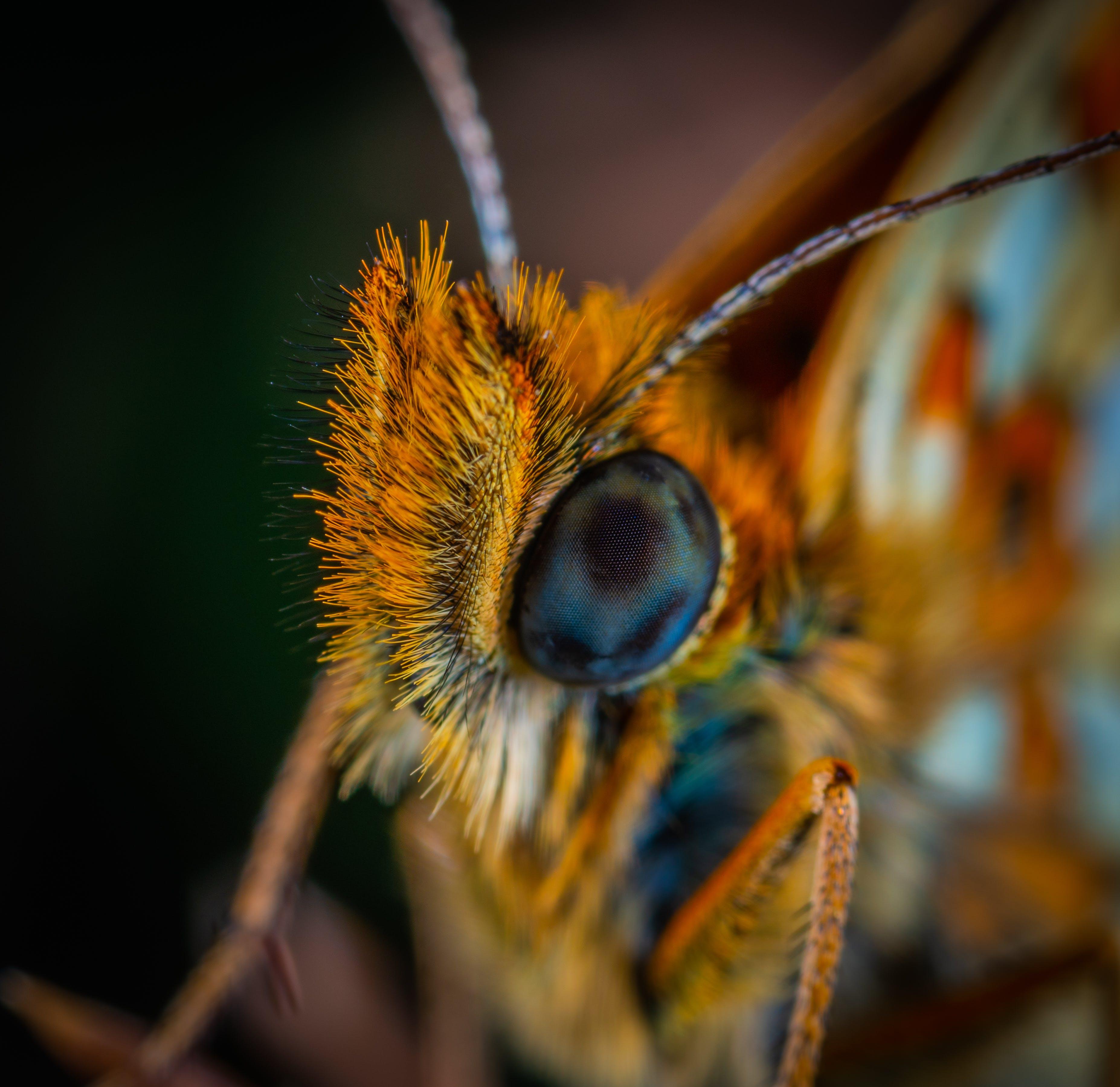 auge, biologie, entomologie