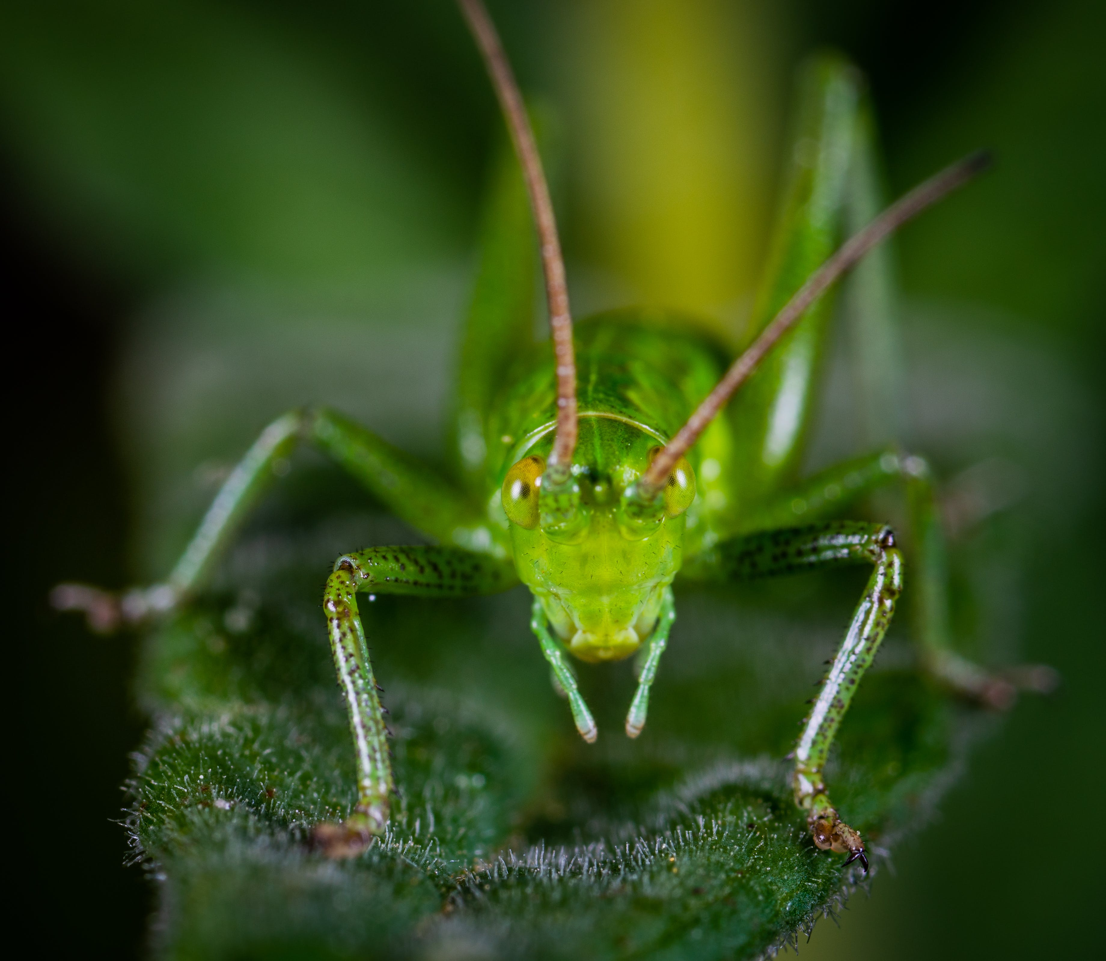 Macro Shot of Green Grasshopper on Leaf