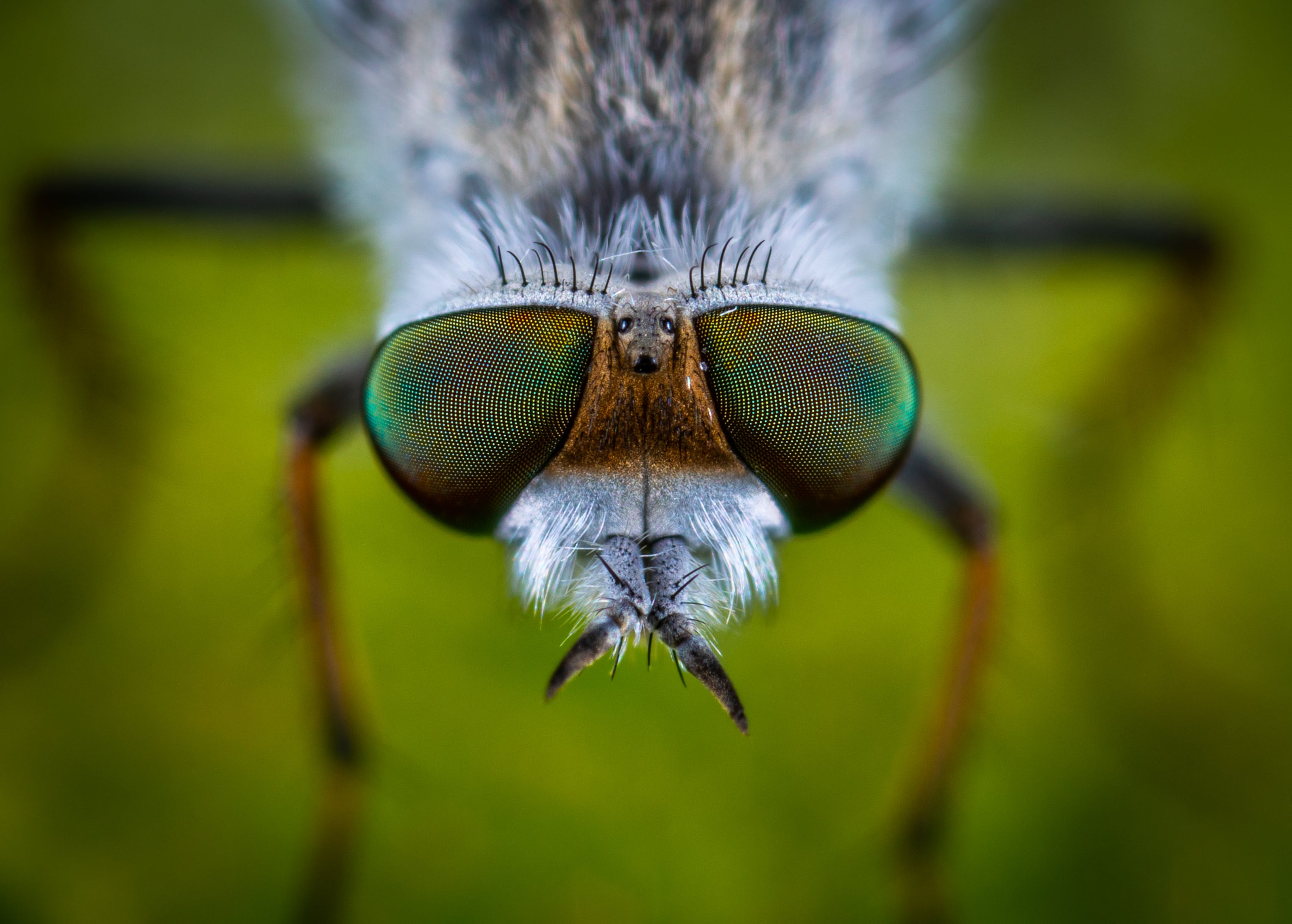 Shallow Focus Photography of Gray Fly