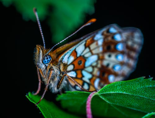 Photos gratuites de aile, animal, antenne, biologie