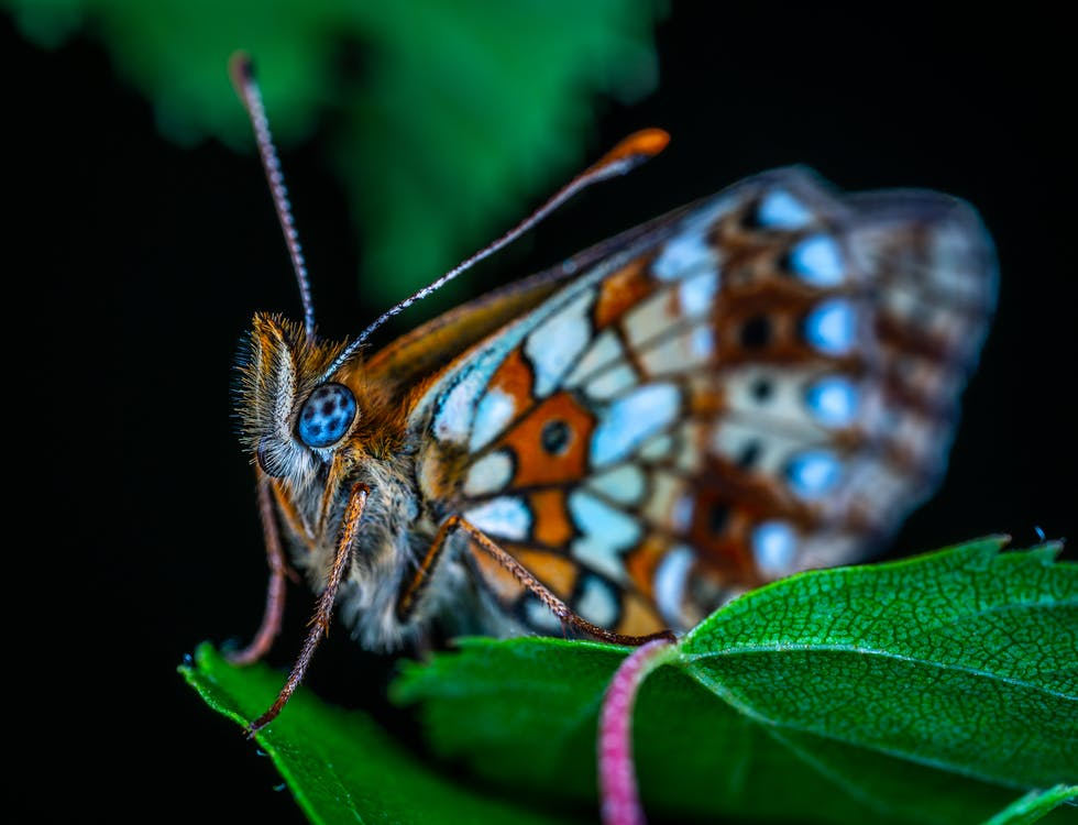 biologi, close-up, dyr