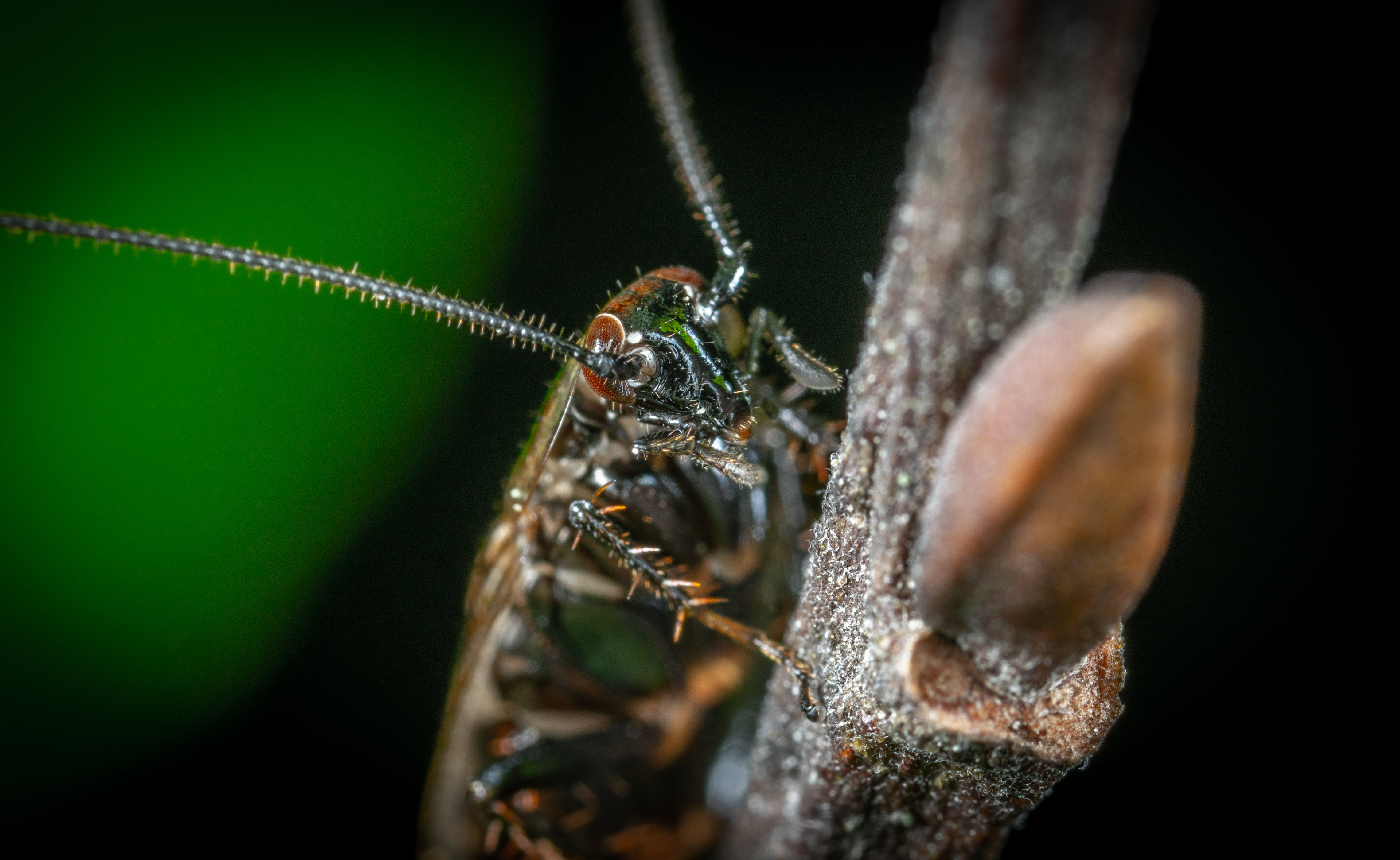 Macro Photo of Brown Winged Insect