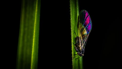 Selective Focus Photography of Black, Pink, and Green Cicada Perched on Side of Leaf