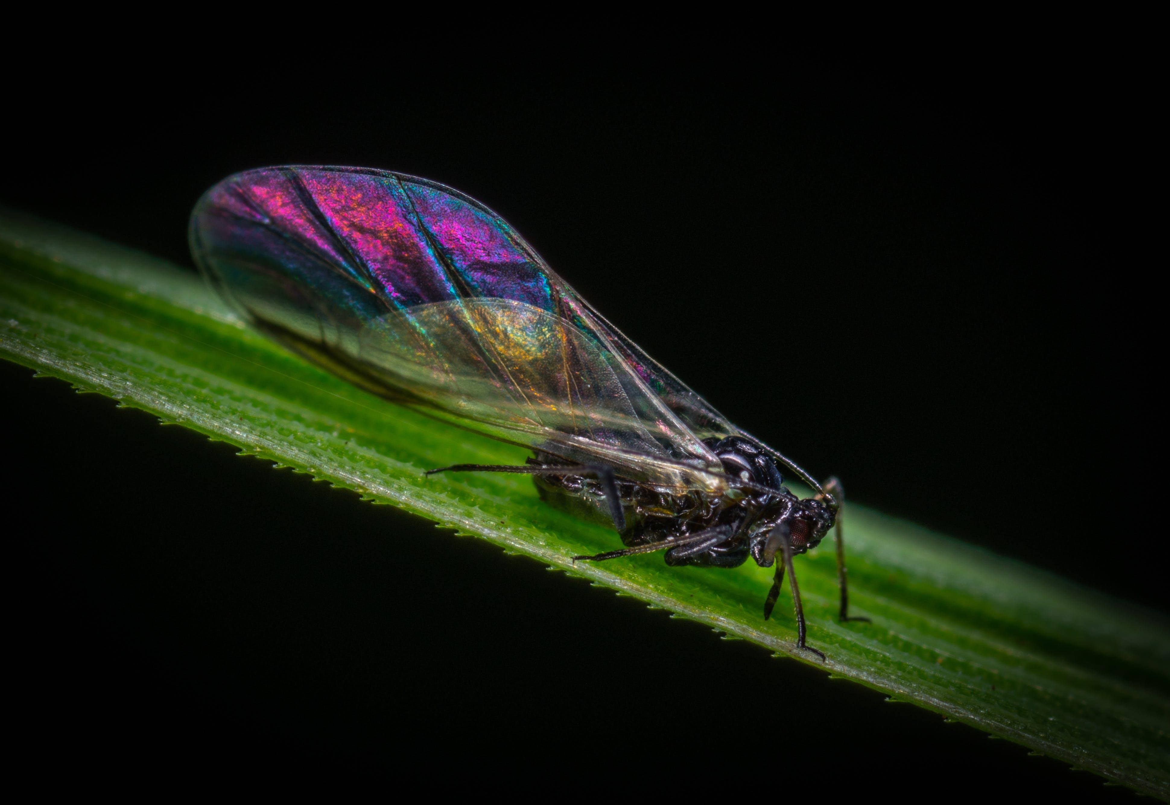 Purple, Black, and Brown Cicada on Green Leaf