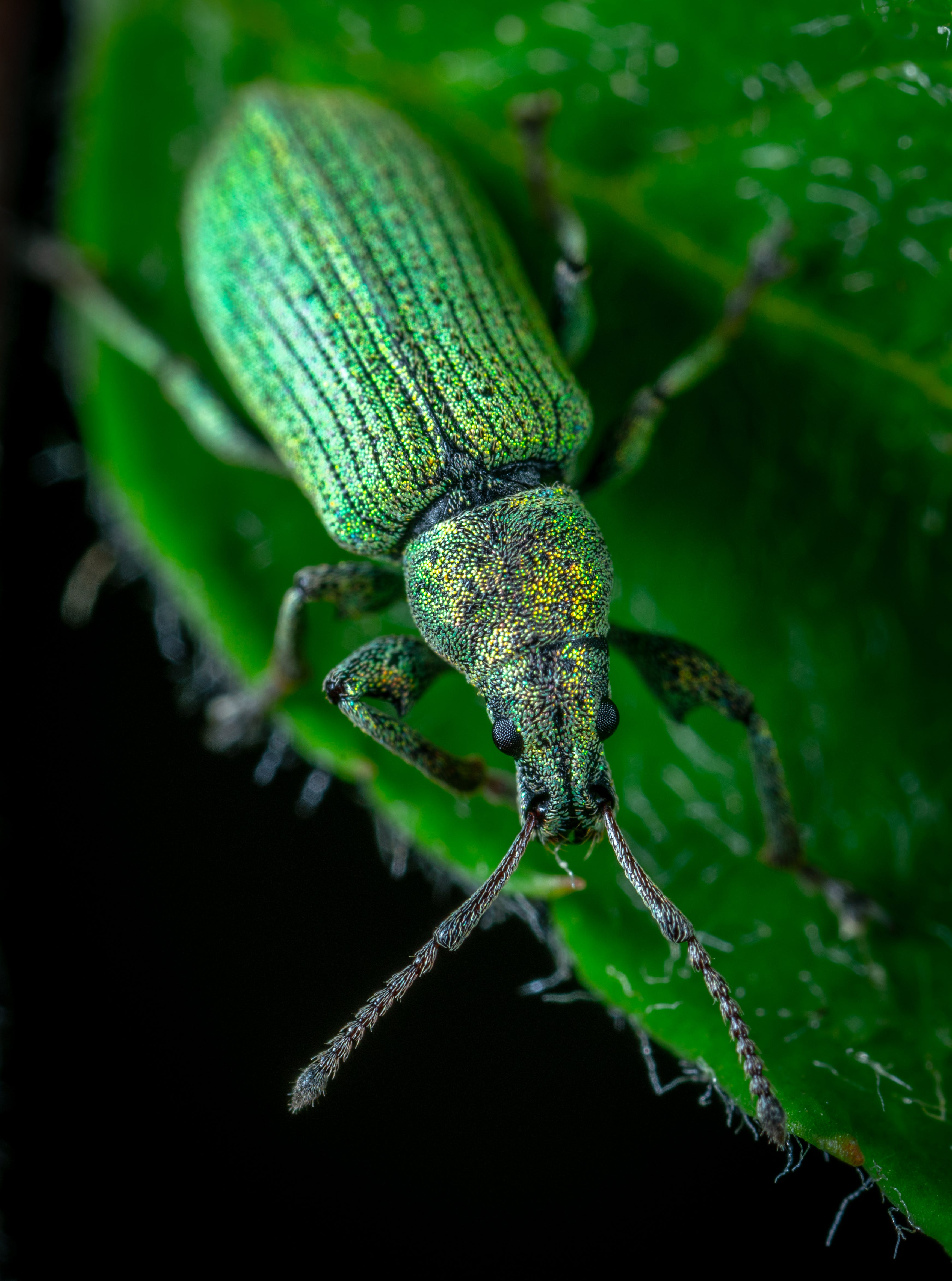 Selective Focus Photography of Blister Beetle