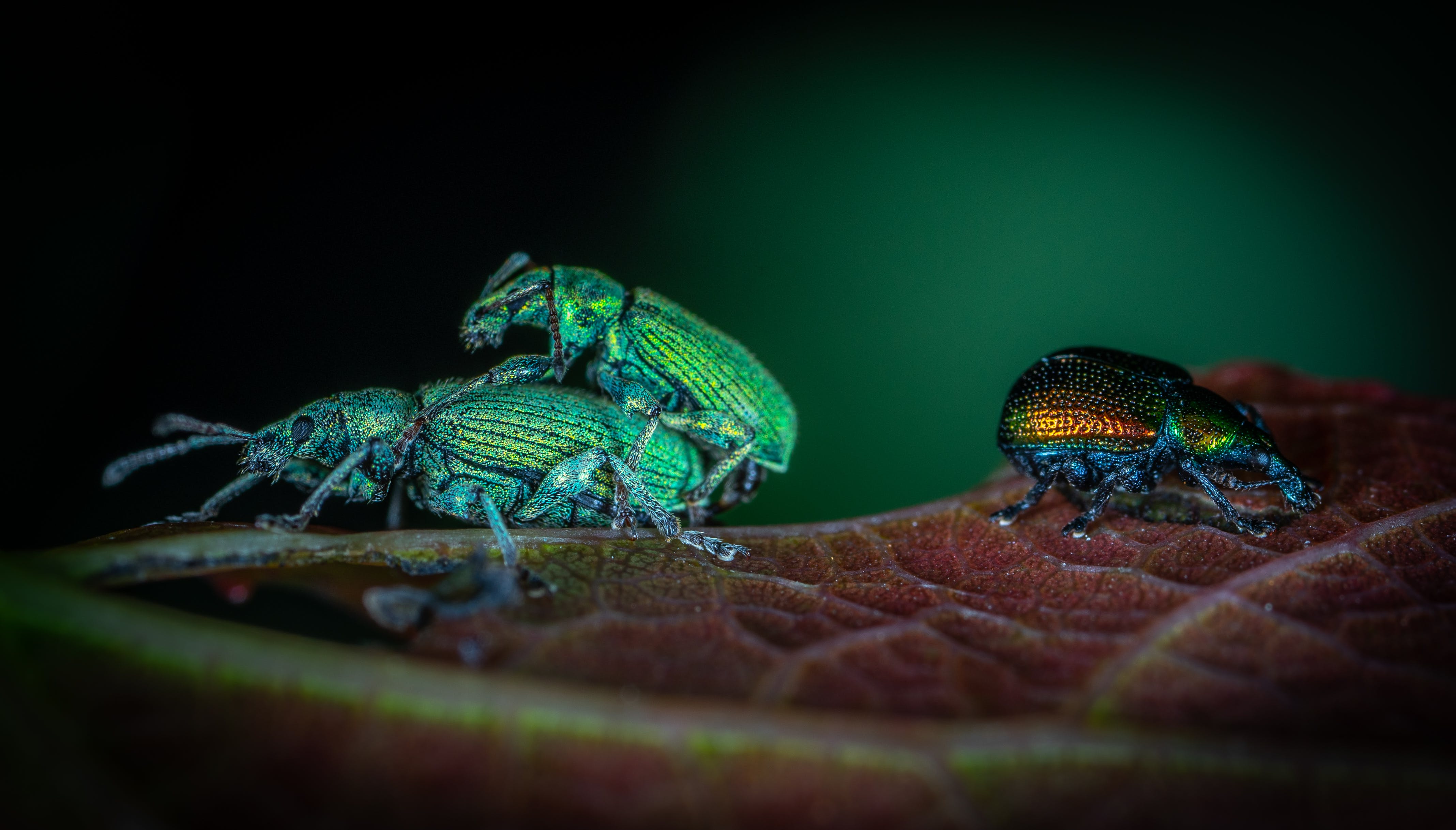 Three Assorted-color Beetles