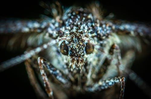 動物, 昆蟲, 模糊, 無脊椎動物 的 免费素材照片