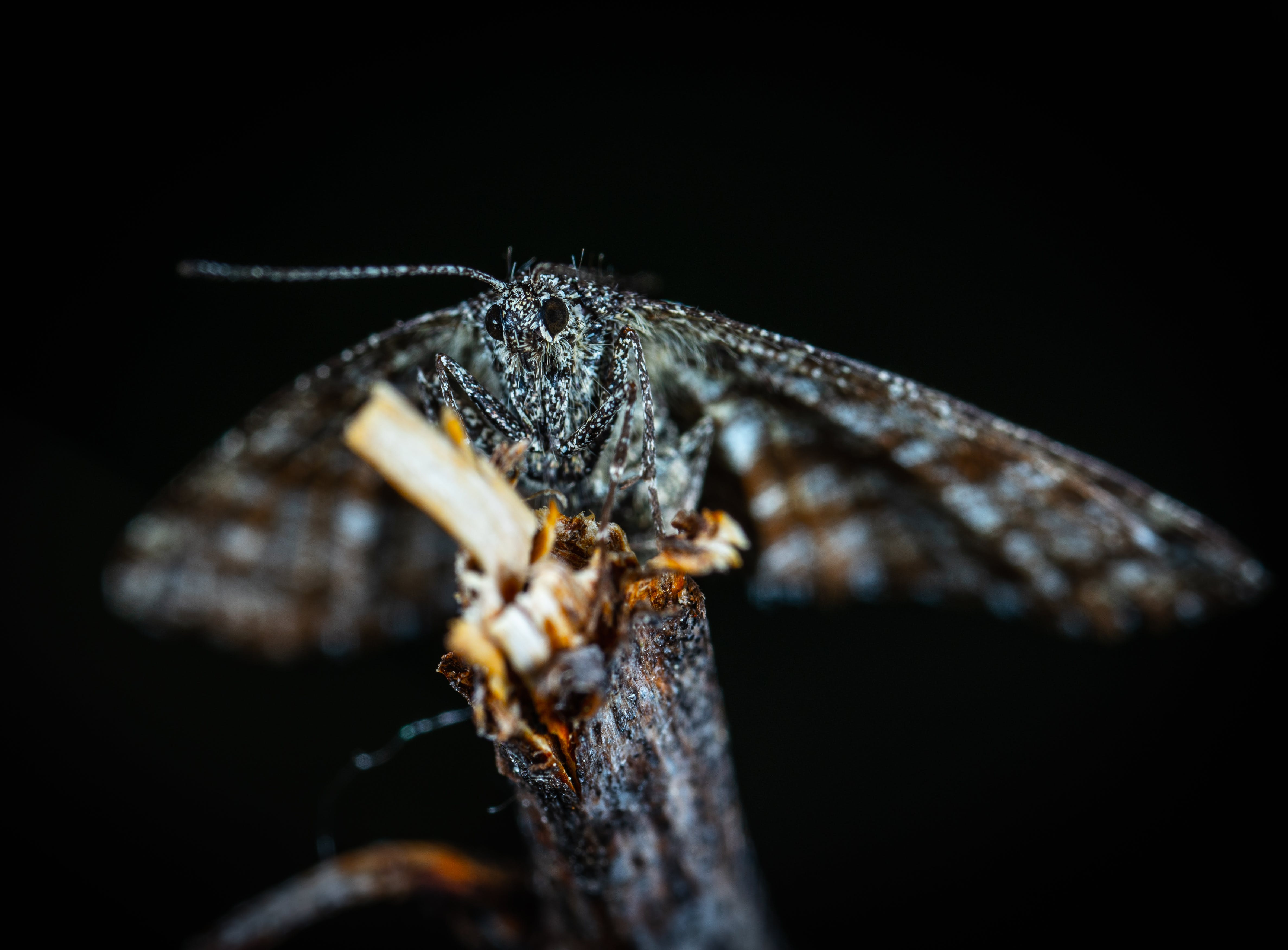 Selective Focus Photography of Insect