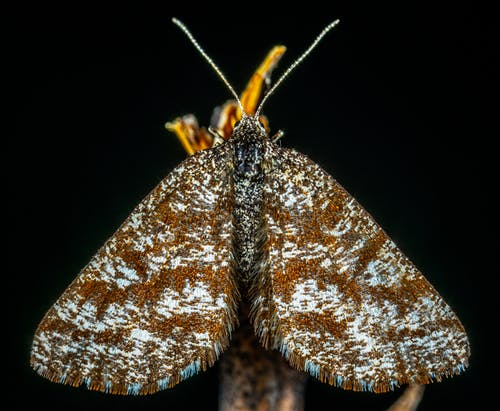 Macro Photography of Brown and Gray Moth
