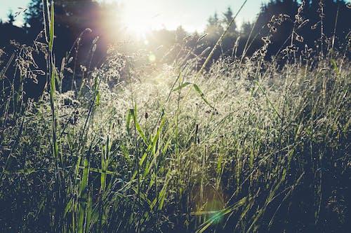 คลังภาพถ่ายฟรี ของ ธรรมชาติ, หญ้า, แสงจ้า