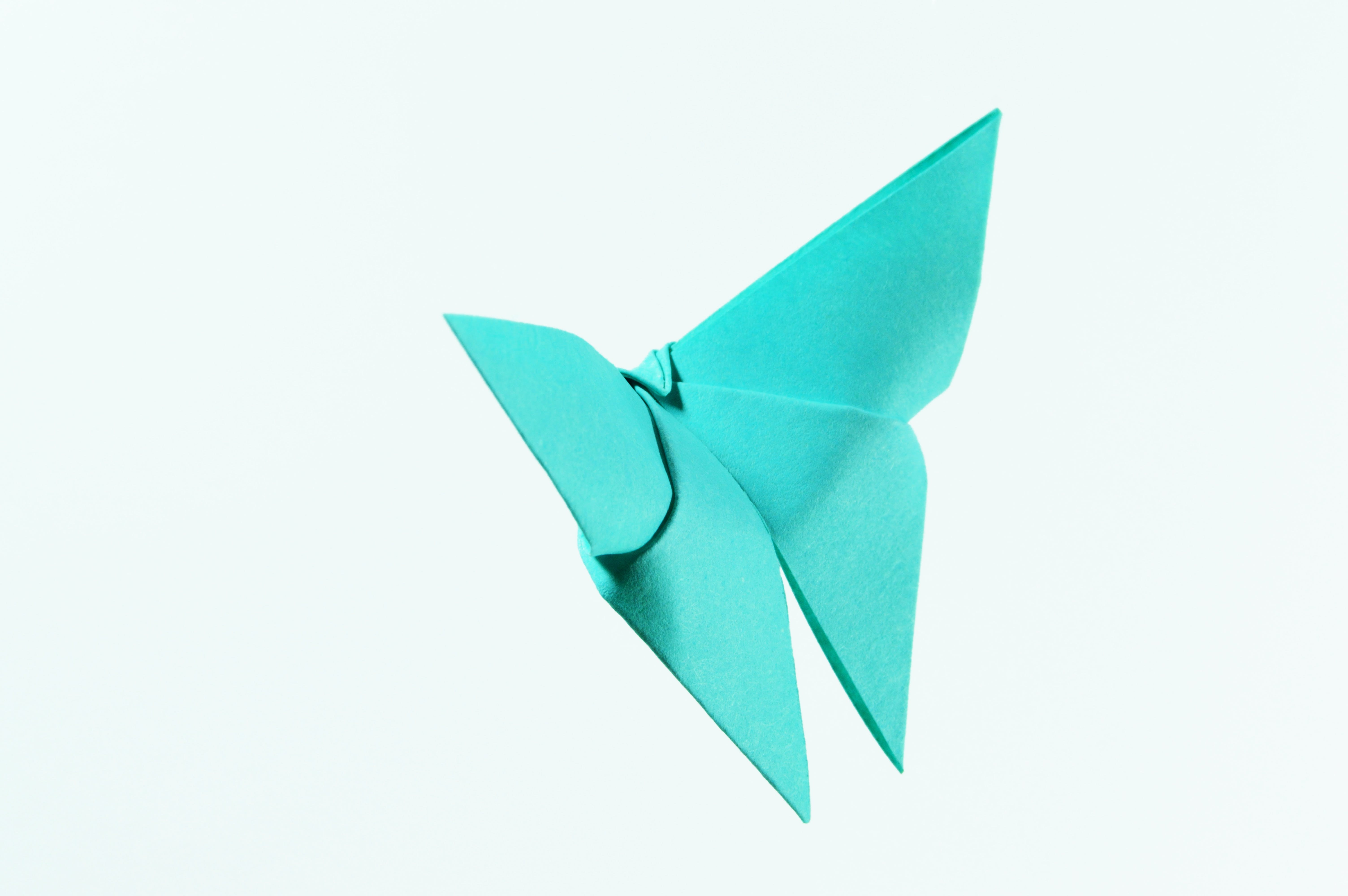 Teal Paper Butterfly Illustration