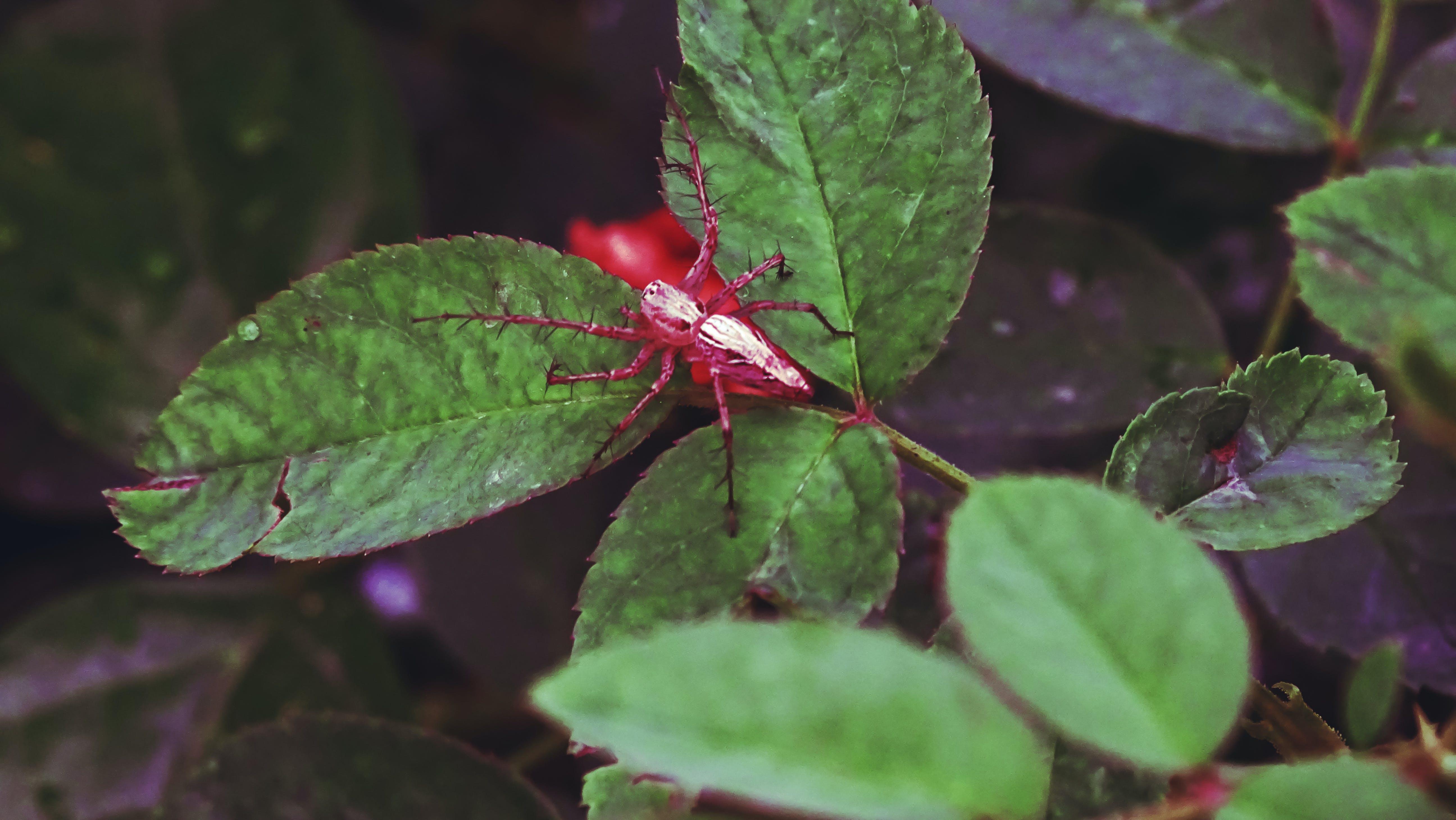 Free stock photo of animal, animal photo, full length, jumping spider
