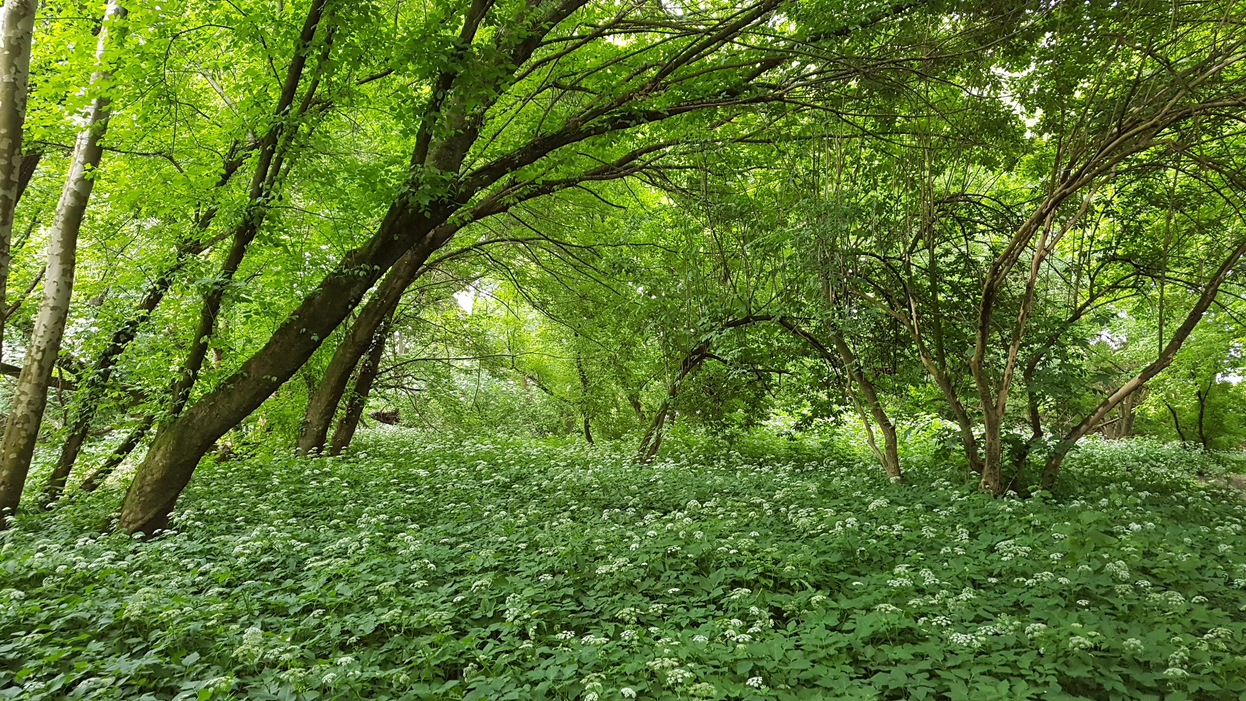 #woods, green, mother nature