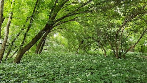 Základová fotografie zdarma na téma #les, matka příroda, přírodní, zelená