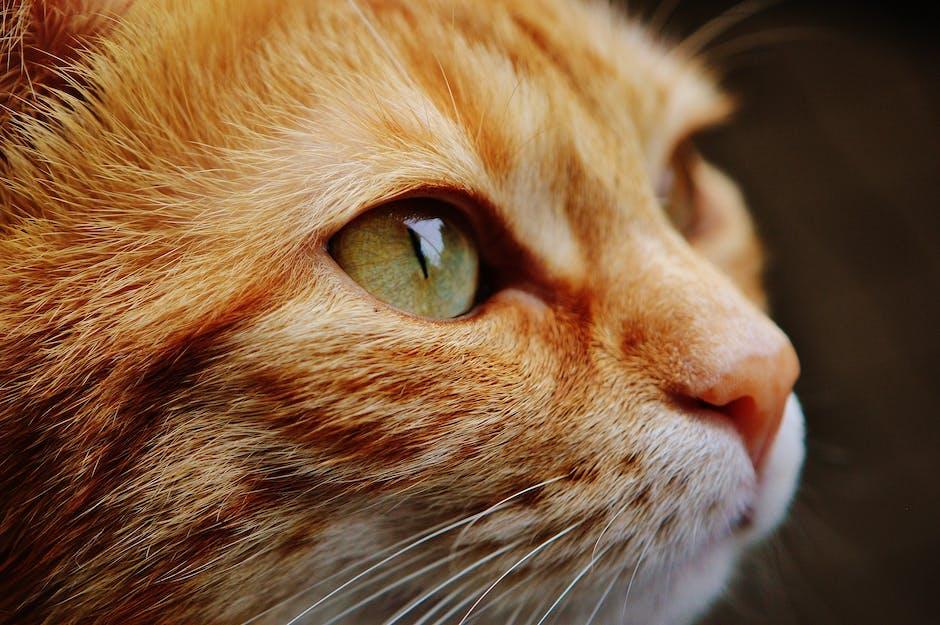 Orange White Cat