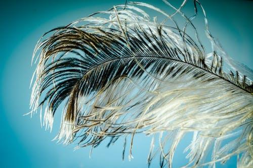 Ilmainen kuvapankkikuva tunnisteilla hiukset, höyhen, lähikuva, makro