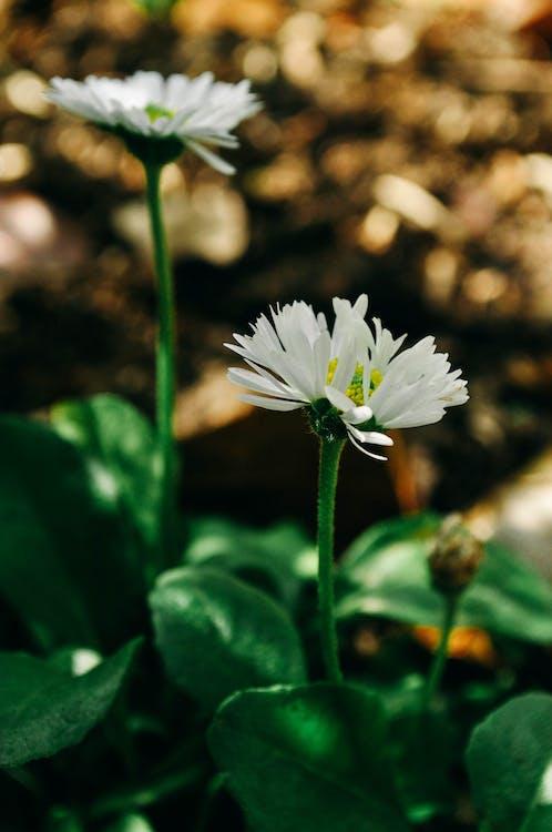 biały, kwiaty, piękne kwiaty