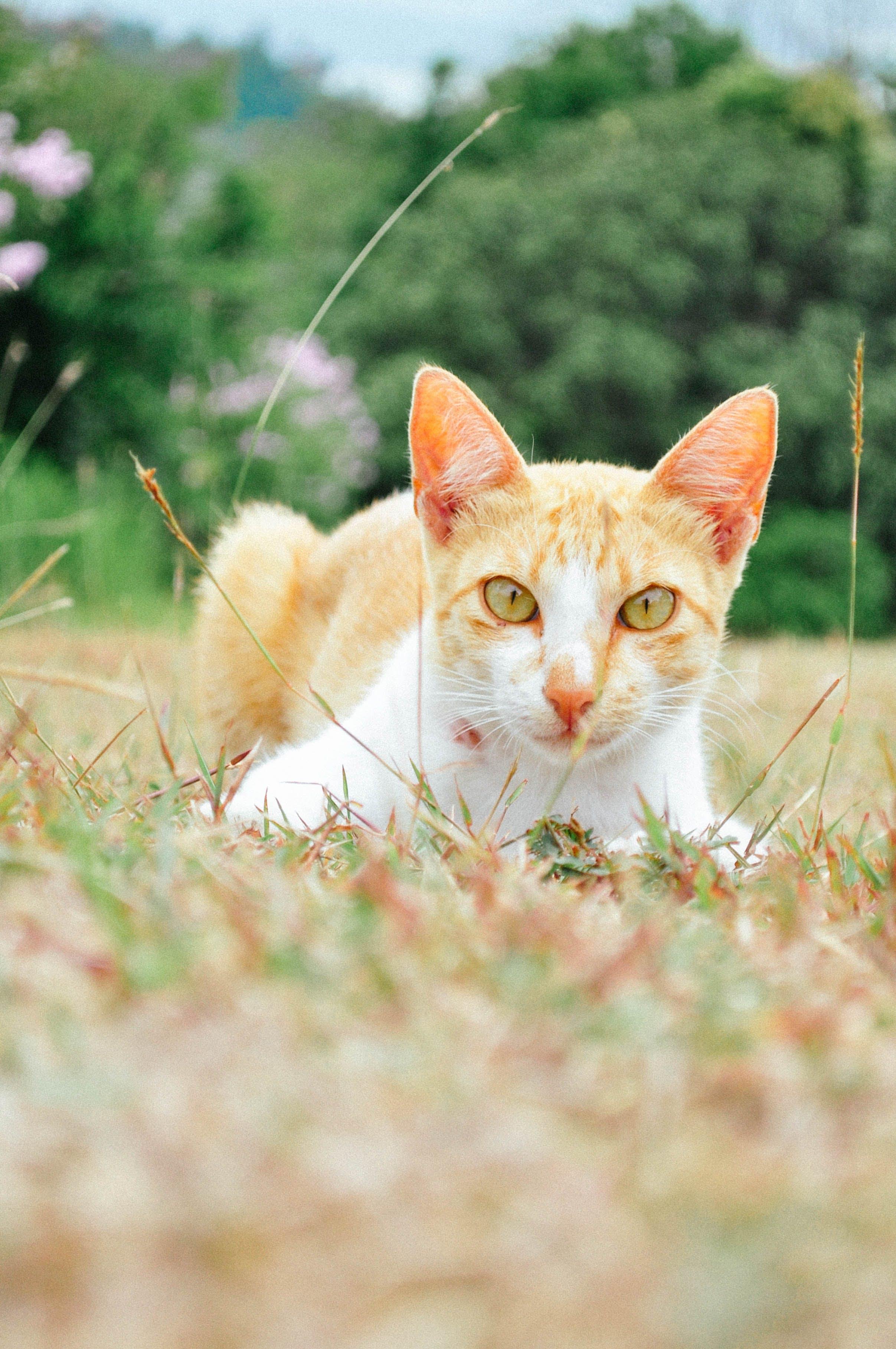 Free stock photo of cat, fierce