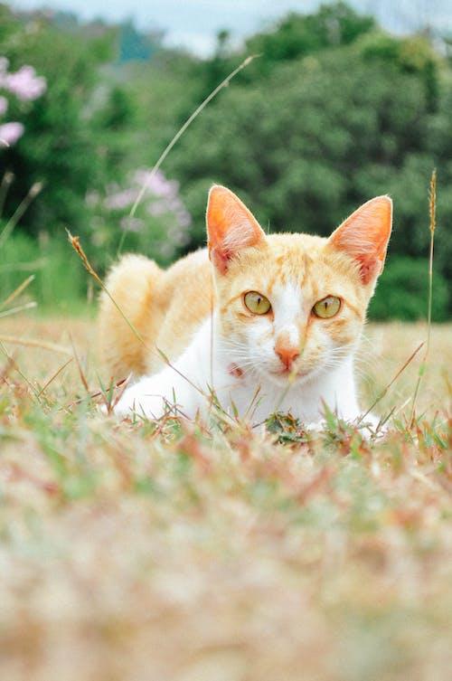 Základová fotografie zdarma na téma divoký, kočka