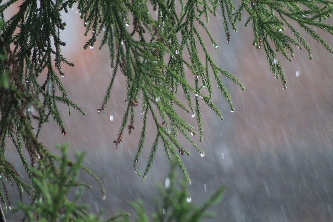 дерево папок, ливень