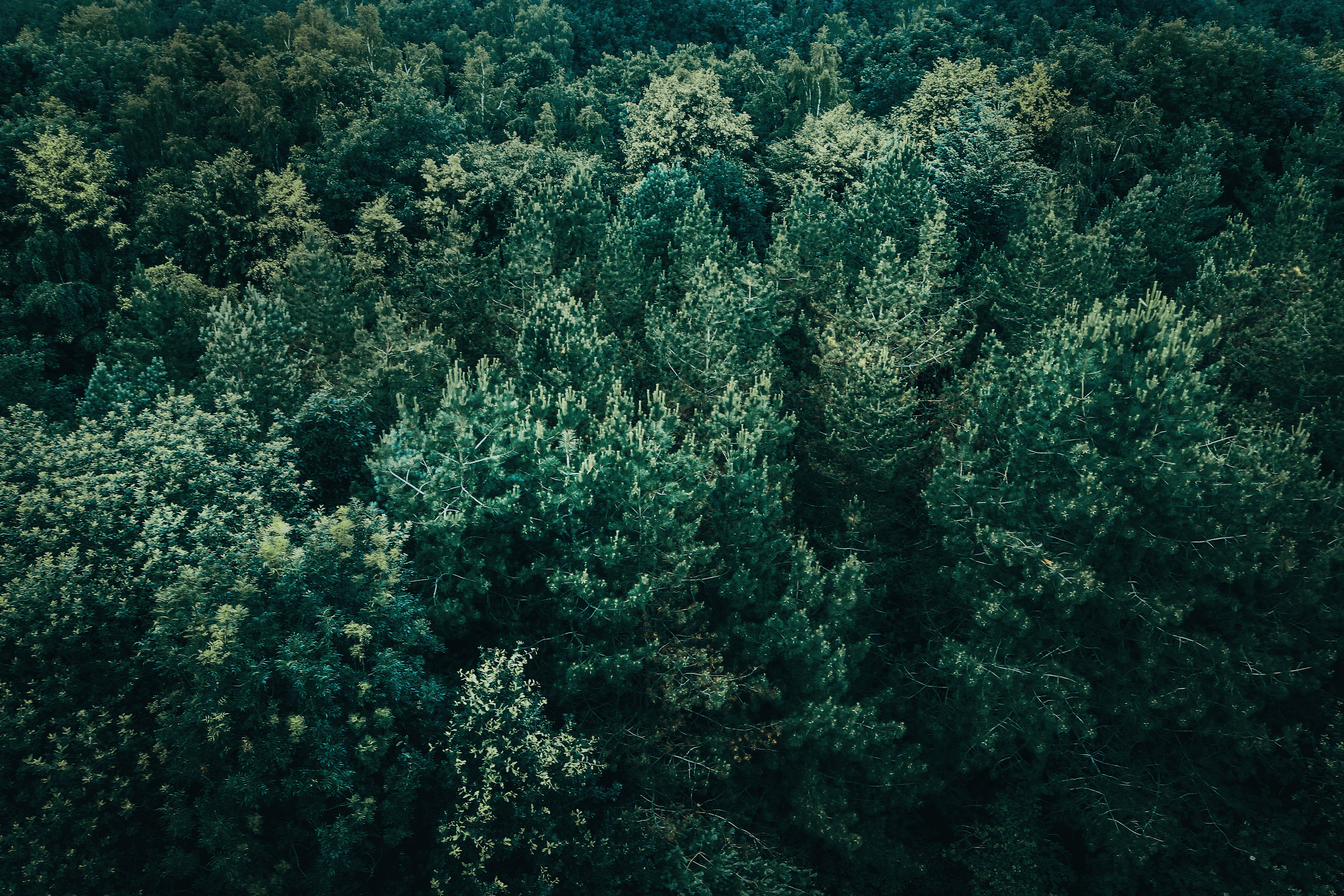 High Angle View of Green Leafed Trees