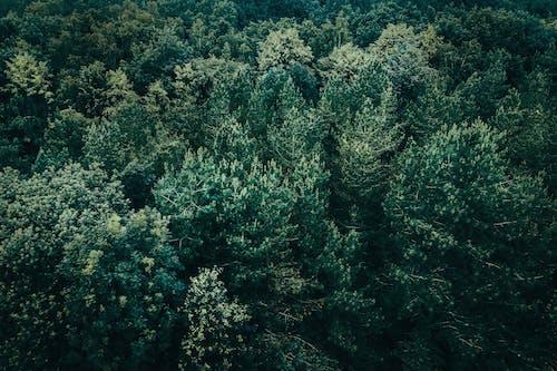 Photos gratuites de arbres, couleurs, d'en haut, environnement