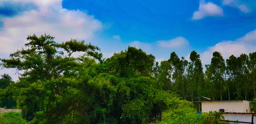Free stock photo of blue sky, jungle, nature, nature photography