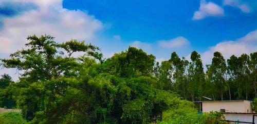 Foto profissional grátis de árvore, céu azul, floresta, fotografia da natureza