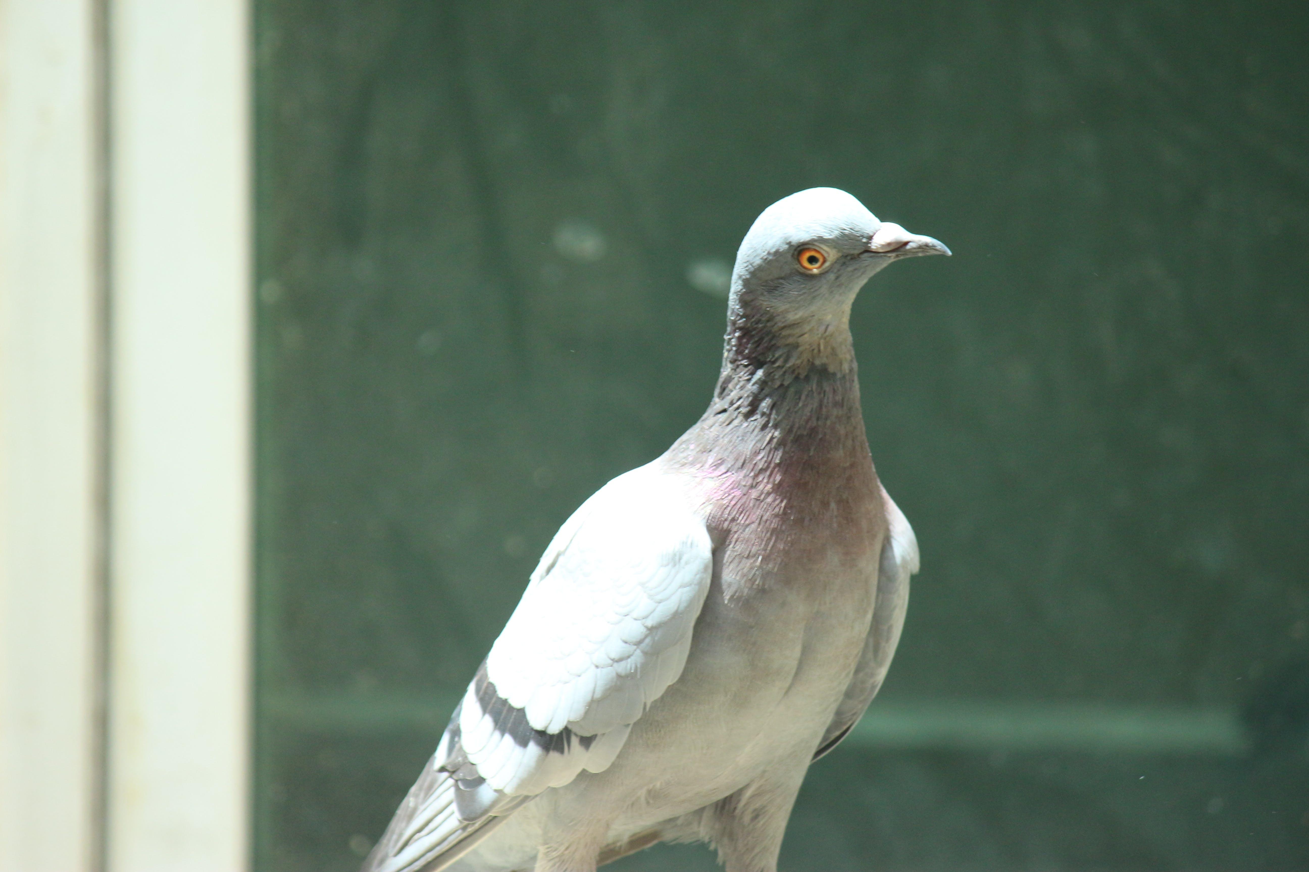 Free stock photo of #bird, #birds, Birds photography