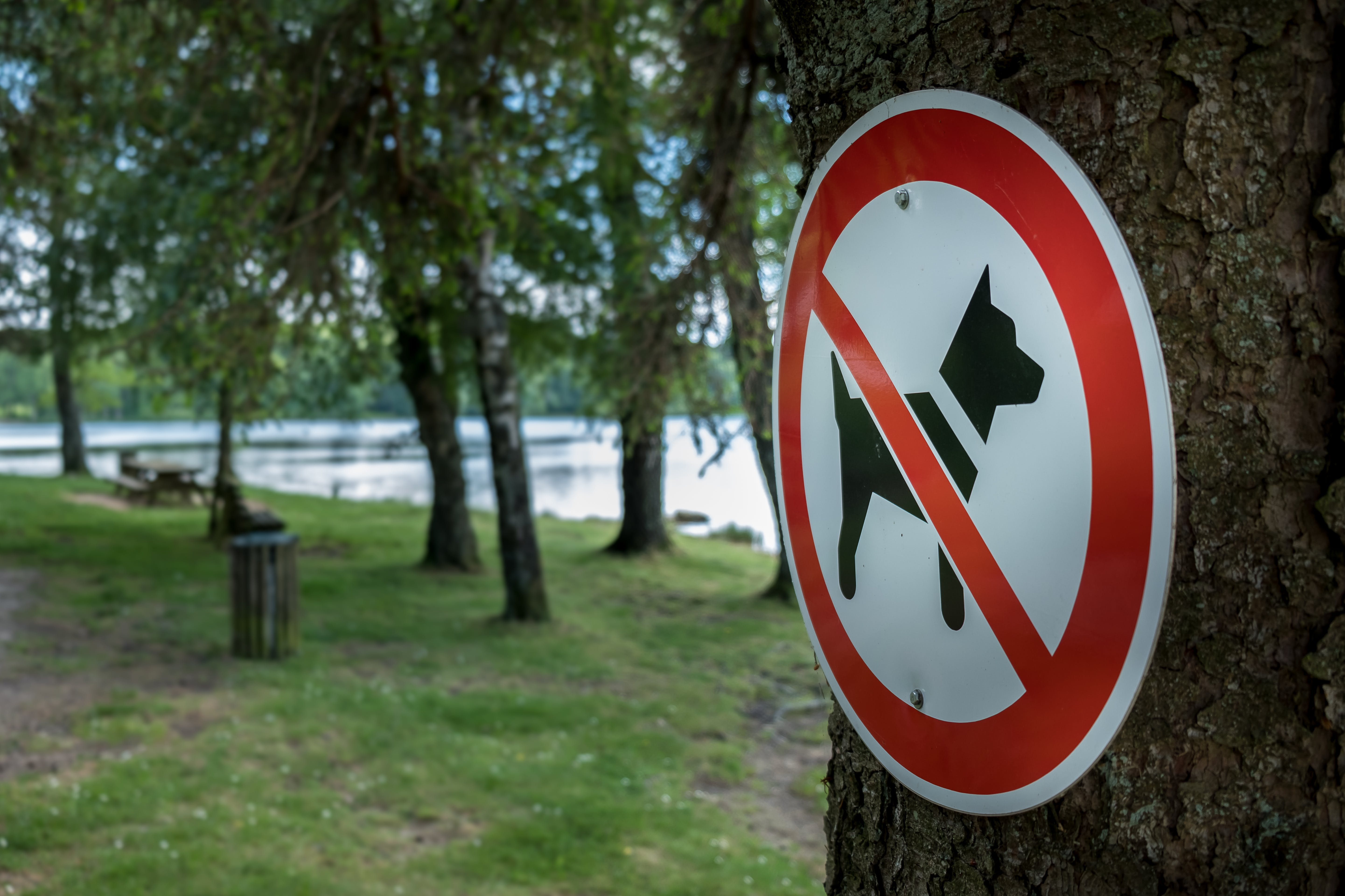 Free stock photo of plate, sign, dog, tree