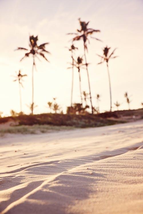 ακτή, άμμος, δύση του ηλίου
