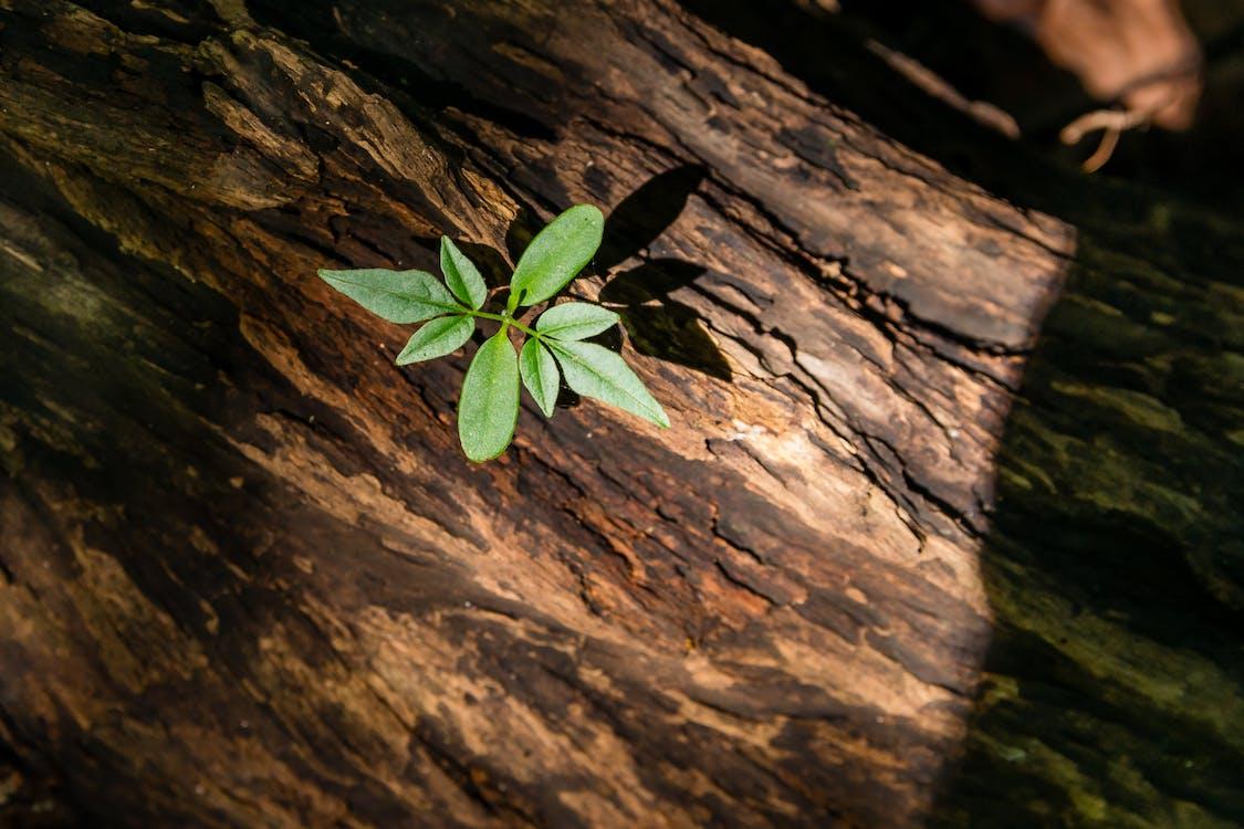 Foto d'estoc gratuïta de planta, vida