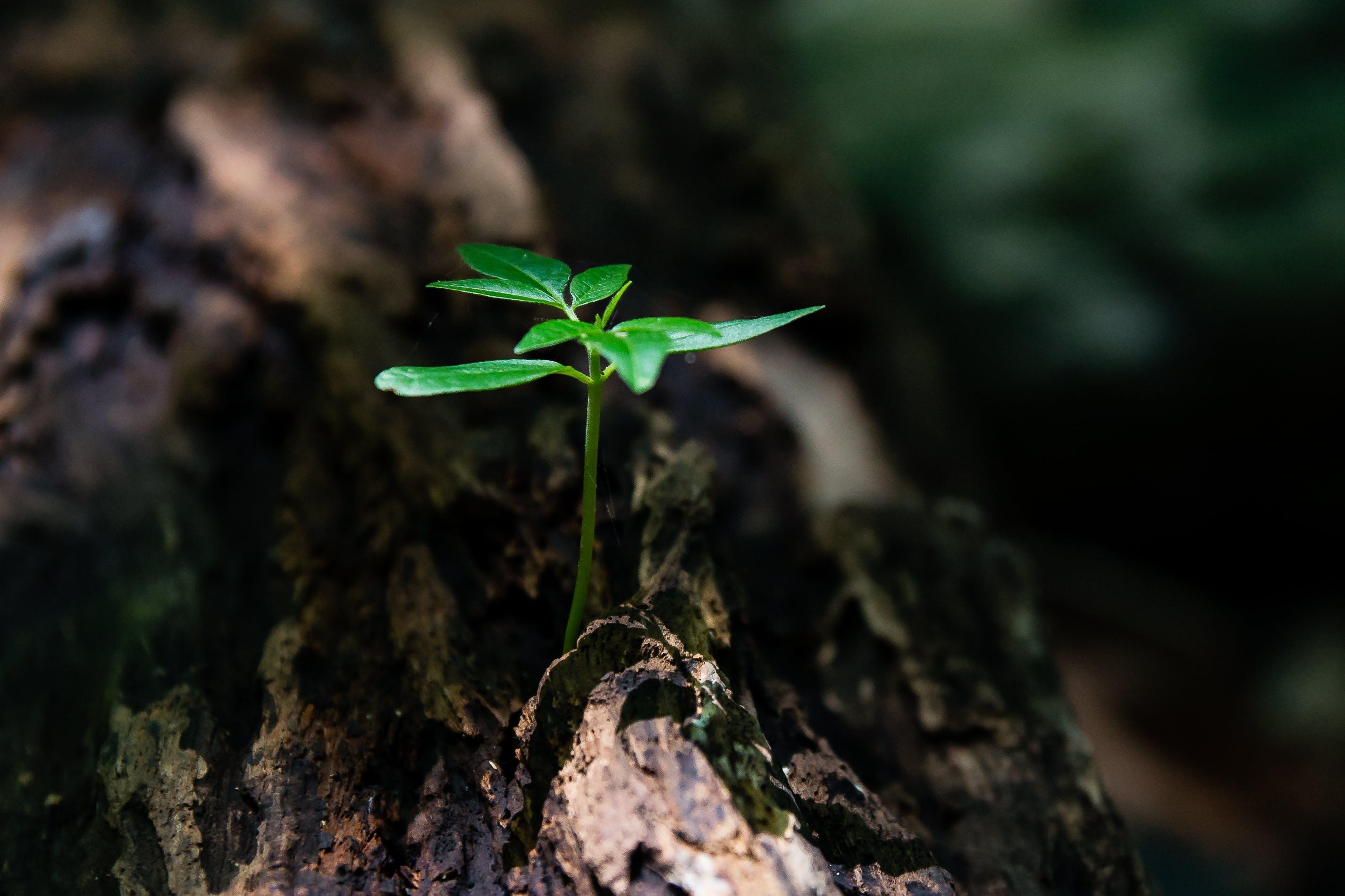 Foto profissional grátis de aumento, chão, close, flora