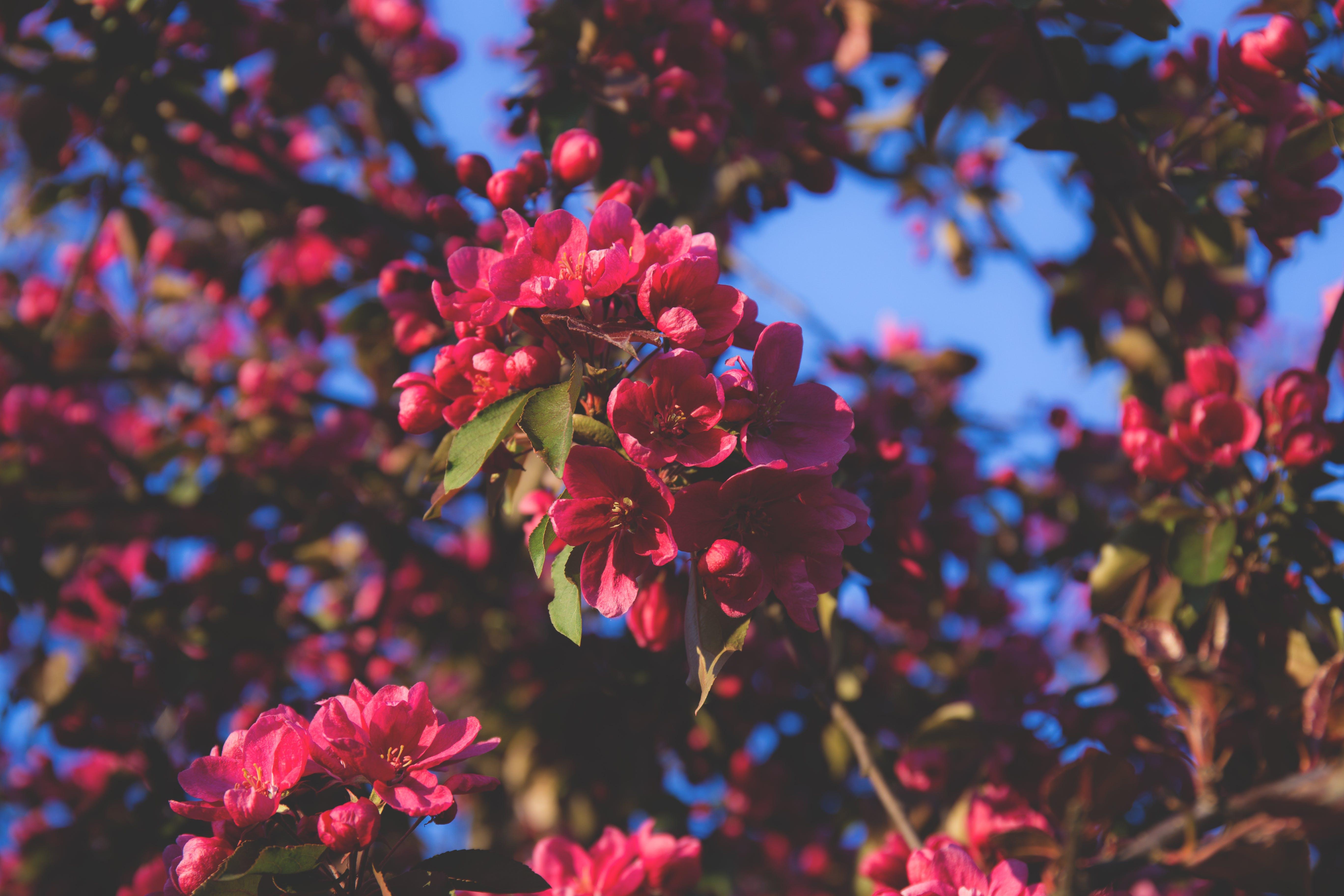 Pink and Green Petal Tree