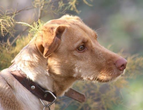 Бесплатное стоковое фото с #пес, сладость